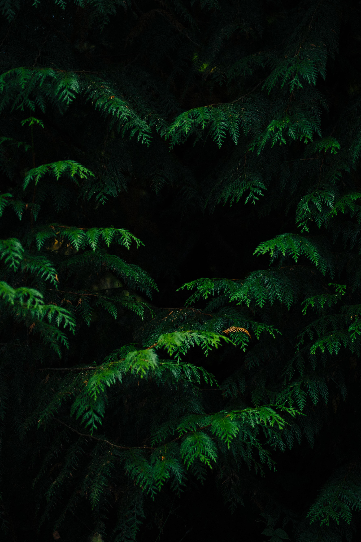 140057 Protetores de tela e papéis de parede Escuro em seu telefone. Baixe Escuro, Natureza, Folhas, Plantar, Planta, Galhos, Ramos, Esculpido fotos gratuitamente