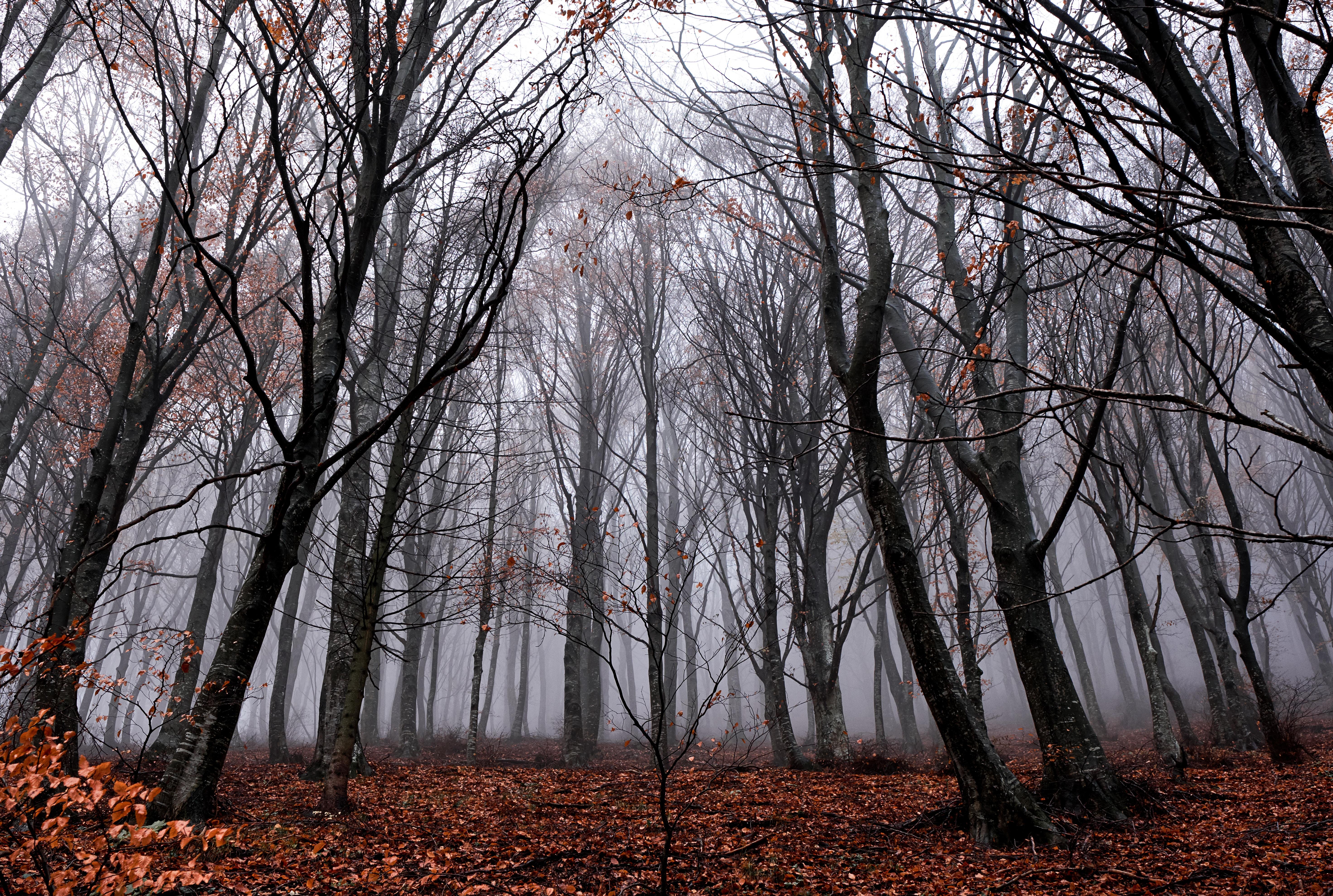 111266 papel de parede 720x1520 em seu telefone gratuitamente, baixe imagens Natureza, Árvores, Outono, Floresta, Névoa, Nevoeiro, Folhagem, Caído 720x1520 em seu celular