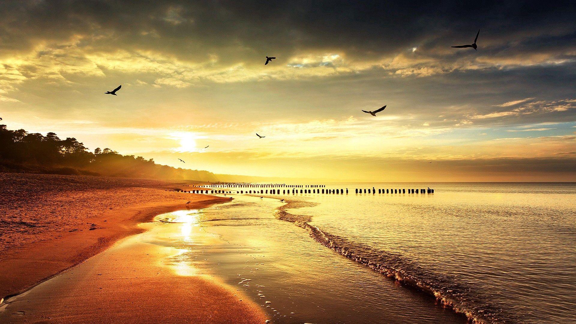 78817 Hintergrundbild herunterladen Licht, Natur, Vögel, Sea, Ufer, Bank, Scheinen - Bildschirmschoner und Bilder kostenlos