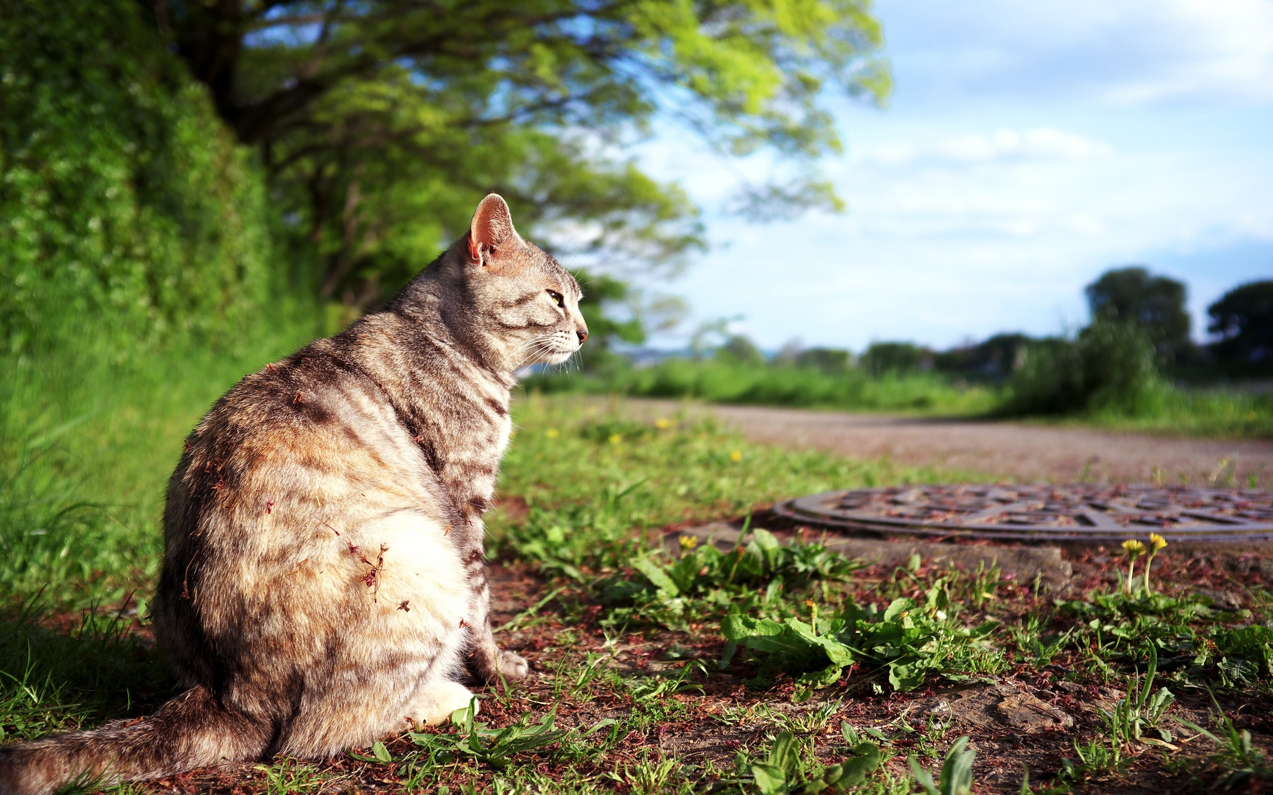 50171 download wallpaper Animals, Cats screensavers and pictures for free