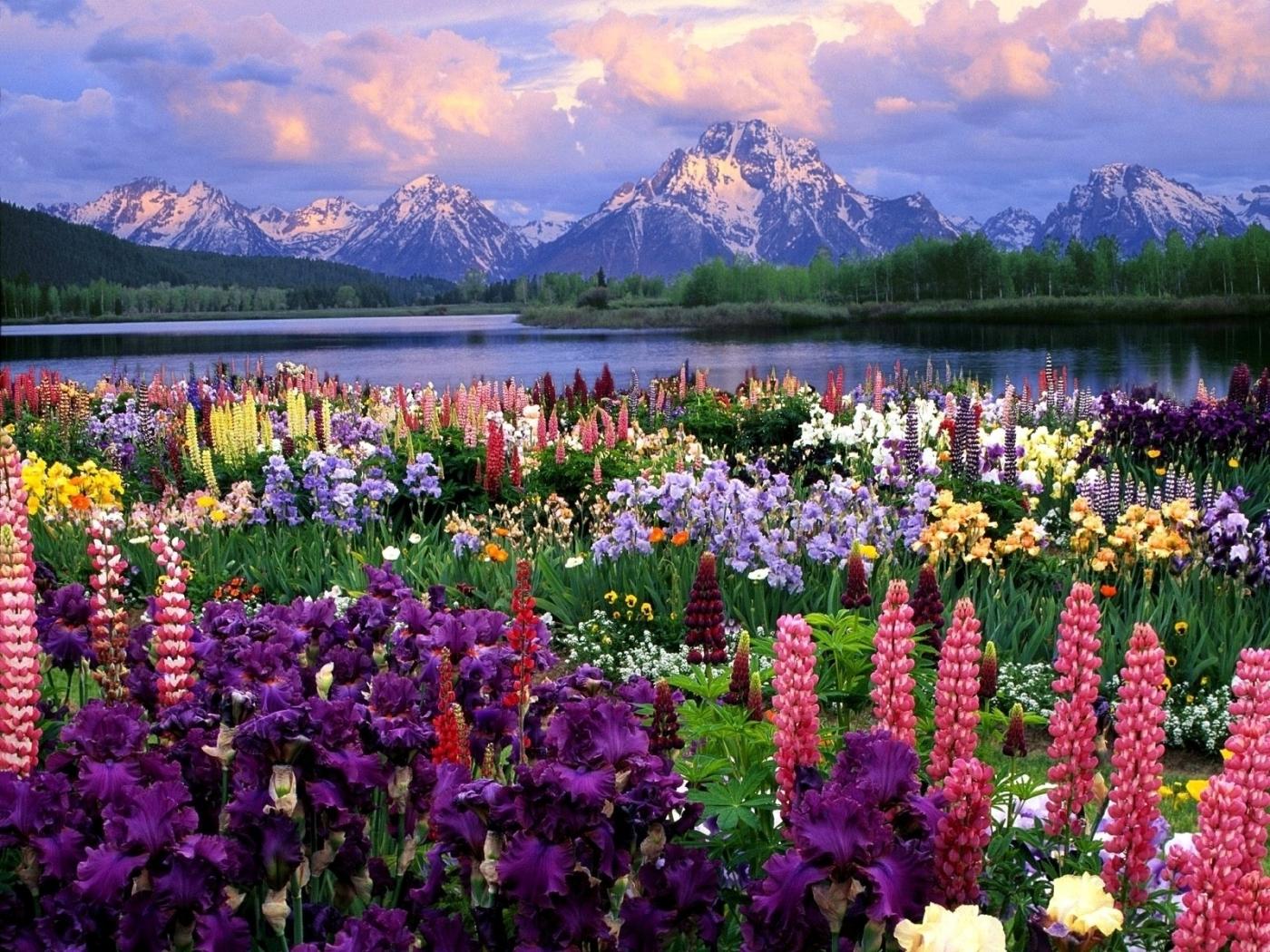 40940 télécharger le fond d'écran Paysage, Fleurs, Montagnes - économiseurs d'écran et images gratuitement