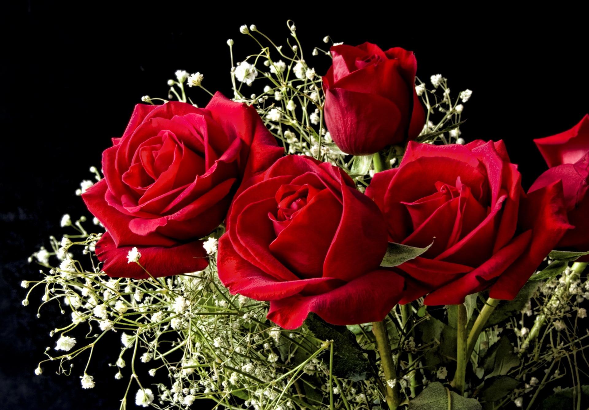 140390 Hintergrundbild herunterladen Hintergrund, Blumen, Roses, Strauß, Bouquet, Schleierkraut, Gipsophile - Bildschirmschoner und Bilder kostenlos