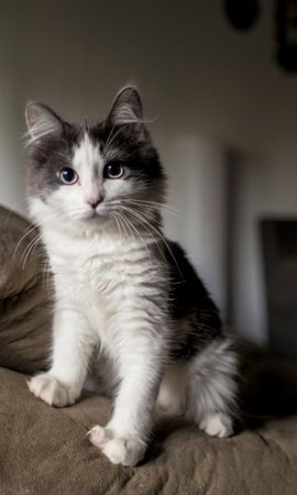 139207 download wallpaper Animals, Kitty, Kitten, Fluffy, Spotted, Spotty, Sofa screensavers and pictures for free
