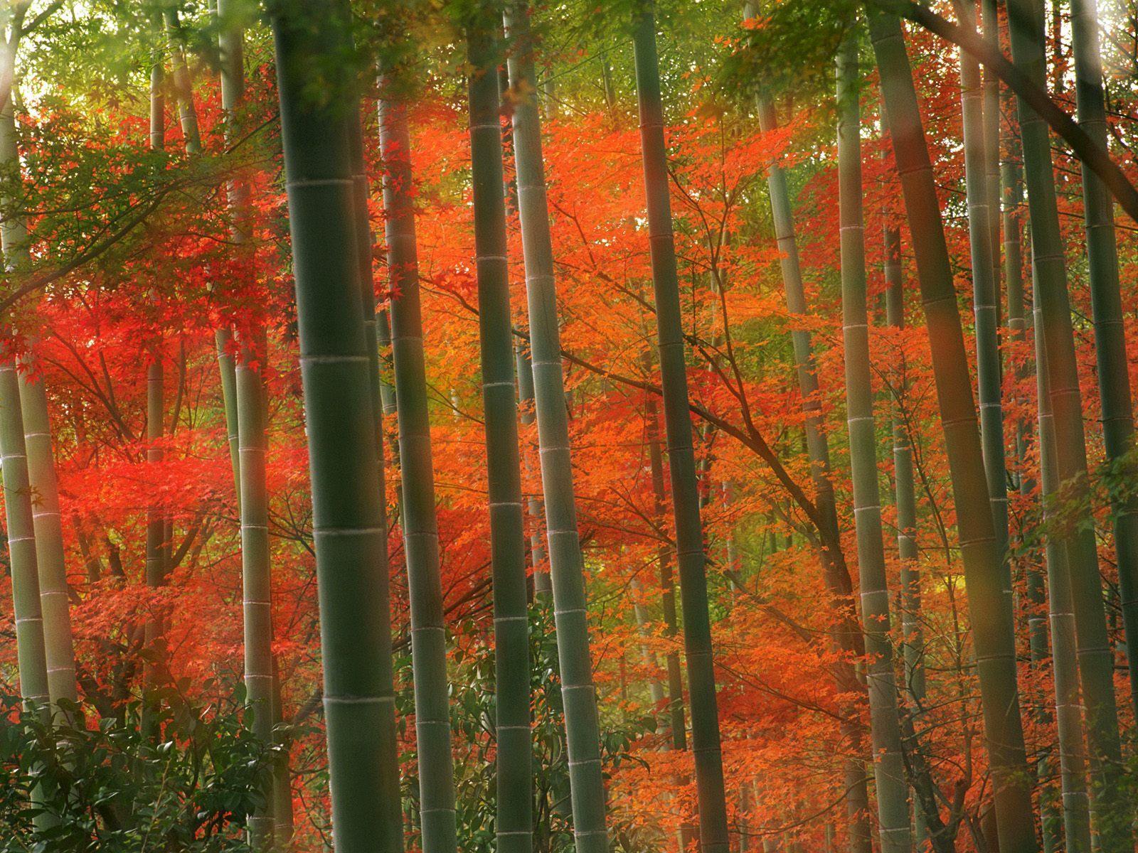 12163 скачать обои Растения, Пейзаж, Деревья - заставки и картинки бесплатно