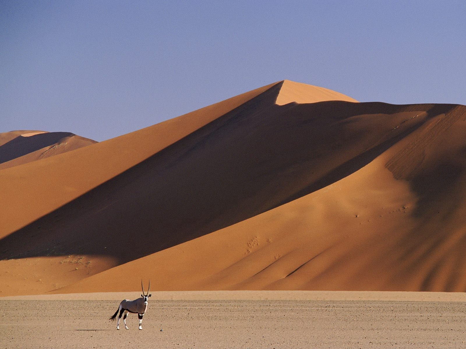 131763 download wallpaper Nature, Dunes, Links, Sand, Animal, Horns, Artiodactyls, Hoofed, Desert screensavers and pictures for free