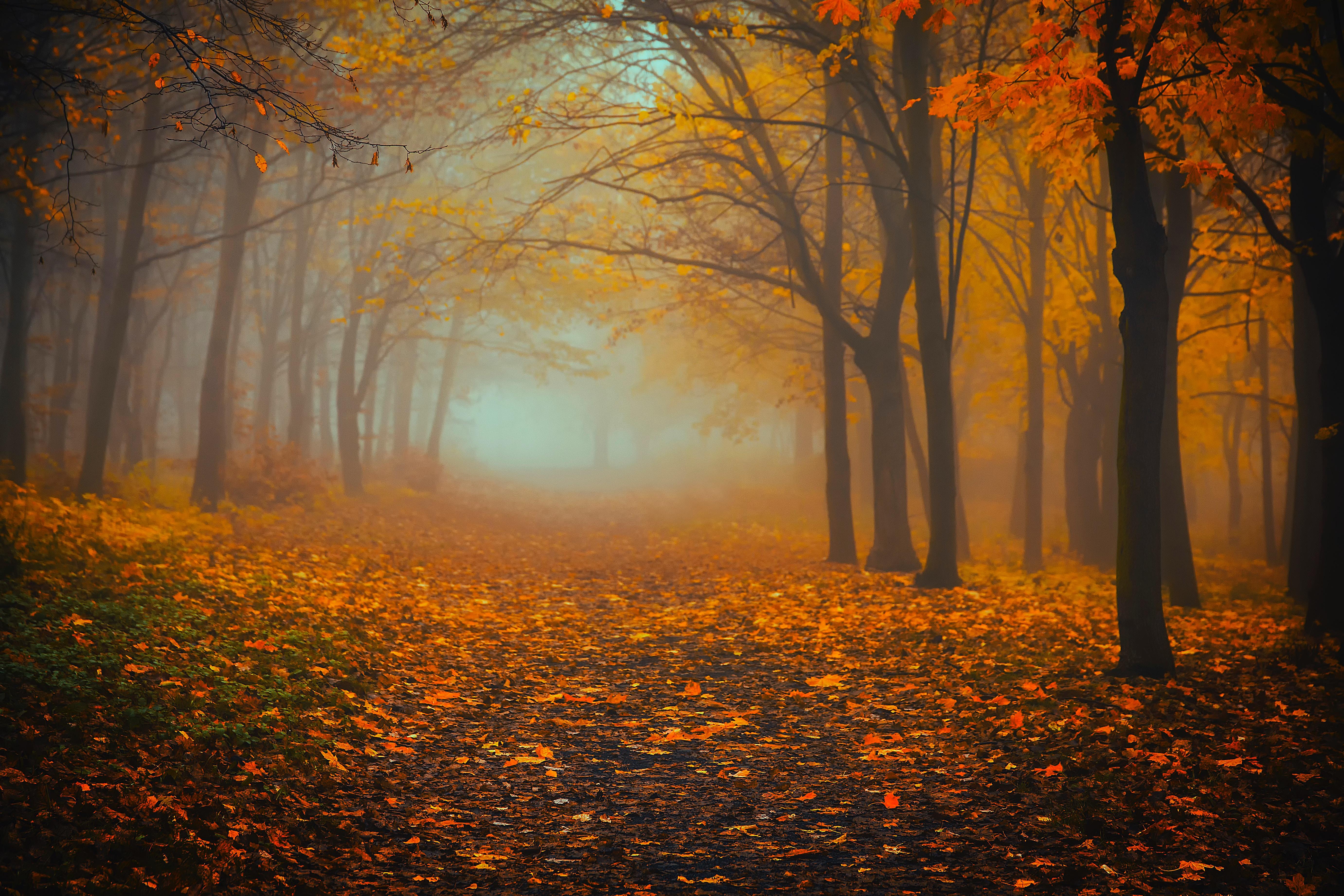 142494 скачать обои Природа, Лес, Туман, Осень, Листва - заставки и картинки бесплатно