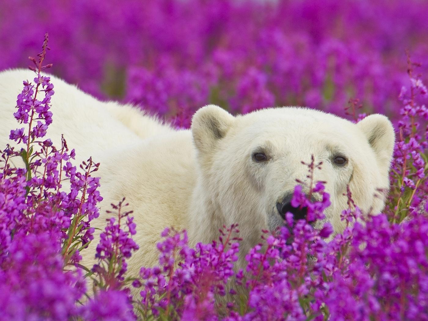 40312 Заставки и Обои Медведи на телефон. Скачать Медведи, Животные картинки бесплатно