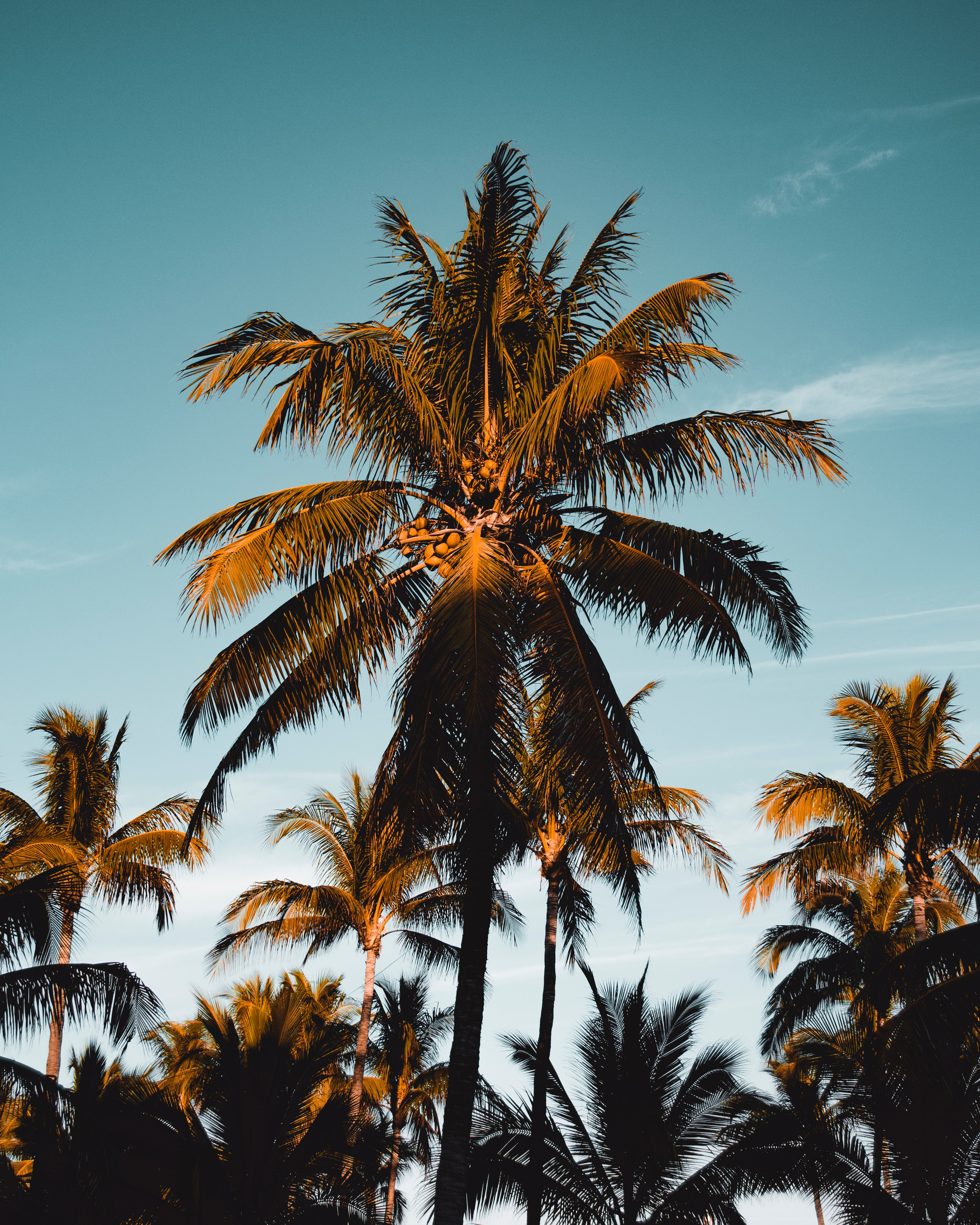 90808 download wallpaper Nature, Palm, Tropics, Branches, Foliage, Sky screensavers and pictures for free