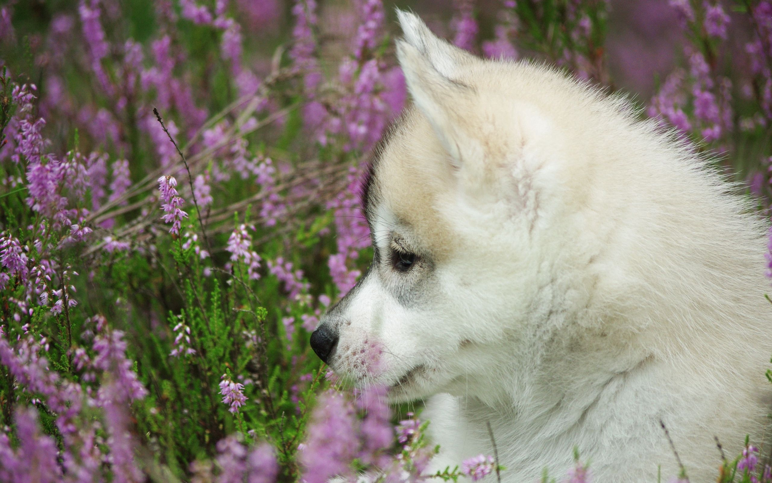 100277 download wallpaper Animals, Puppy, Muzzle, Profile, Dog screensavers and pictures for free