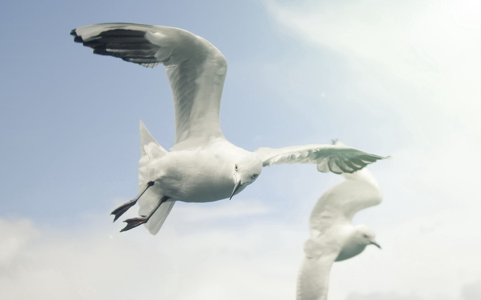 158064 download wallpaper Animals, Sky, Flight, Wings, Sweep, Wave, Birds, Seagulls screensavers and pictures for free