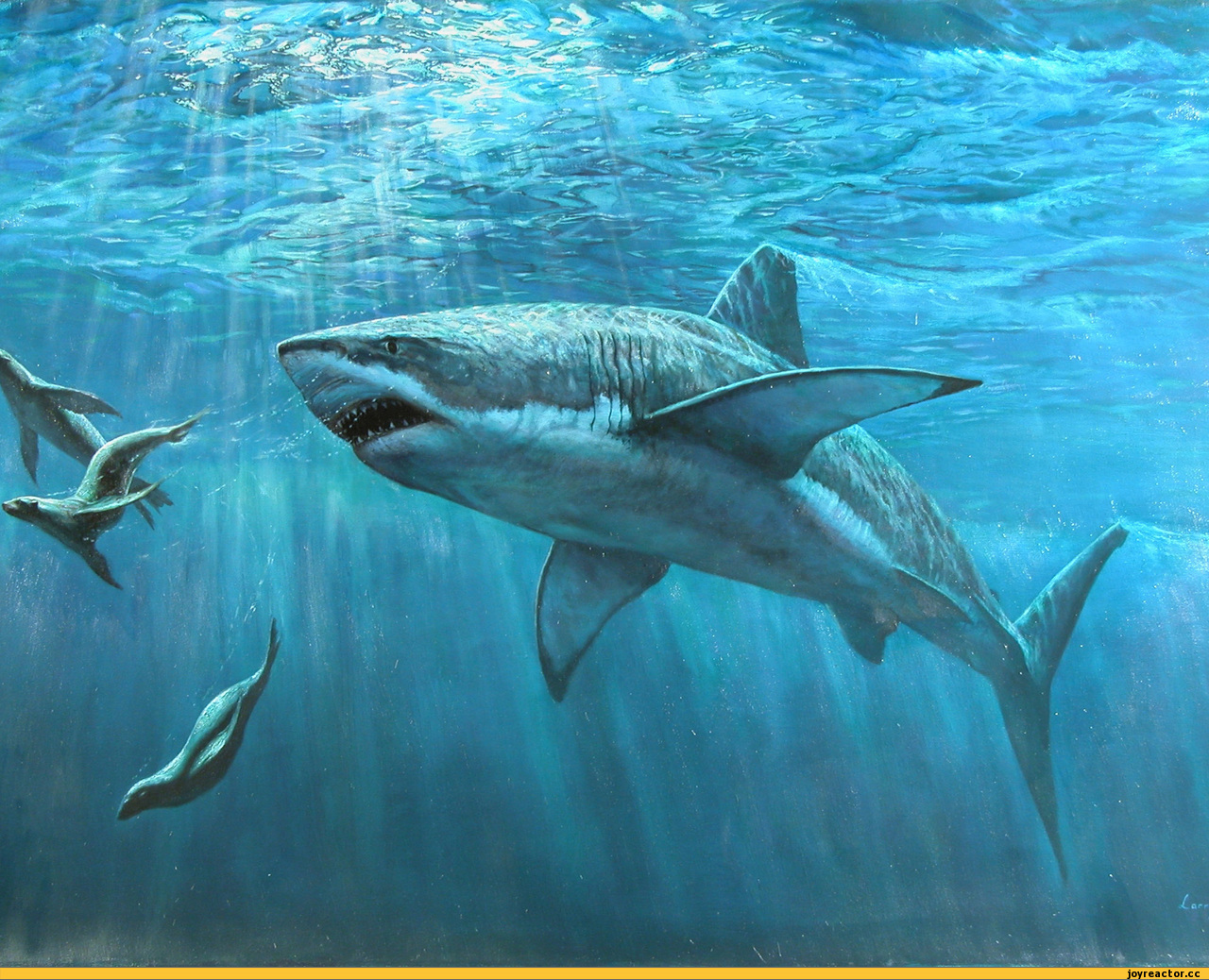 16520 download wallpaper Animals, Sea, Sharks, Fishes screensavers and pictures for free