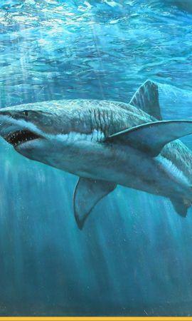 16520 baixar papel de parede Animais, Mar, Sharks, Peixes - protetores de tela e imagens gratuitamente