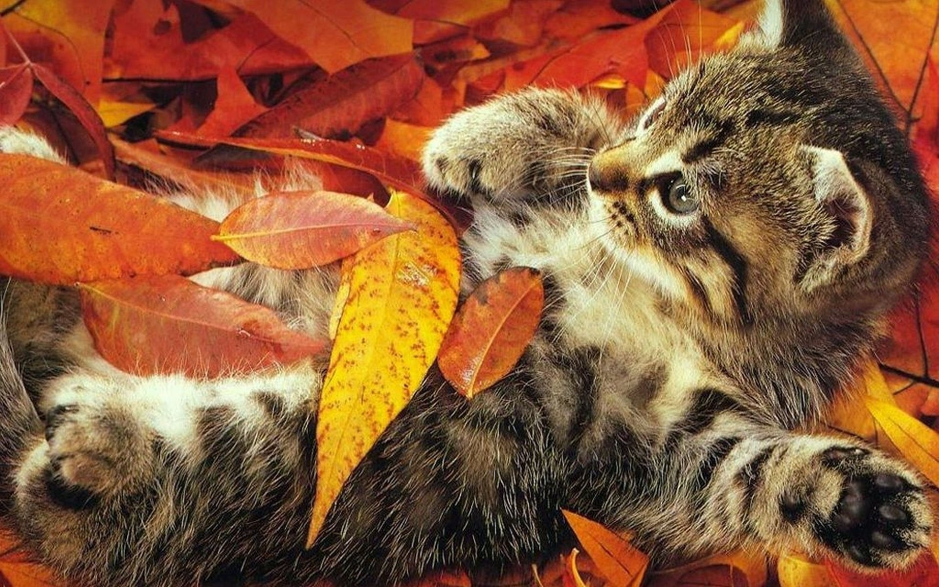 49028 download wallpaper Animals, Cats screensavers and pictures for free