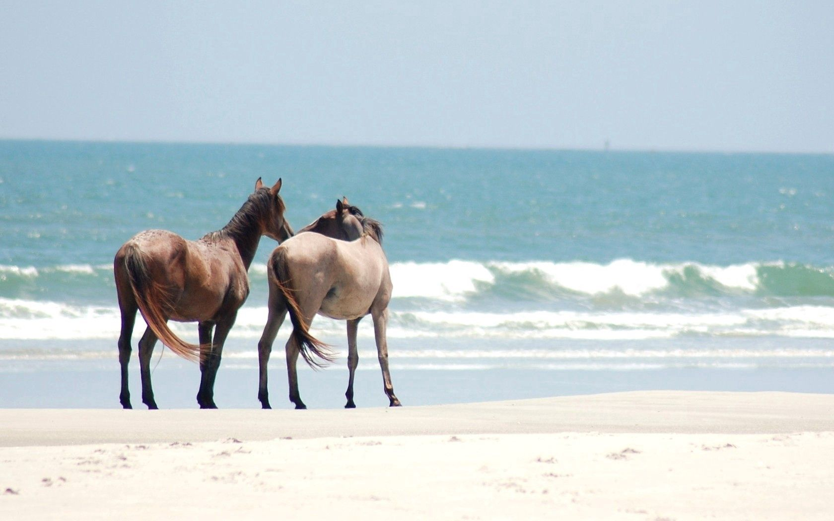 122595 download wallpaper Animals, Horses, Stroll, Shore, Bank, Sand, Sea screensavers and pictures for free