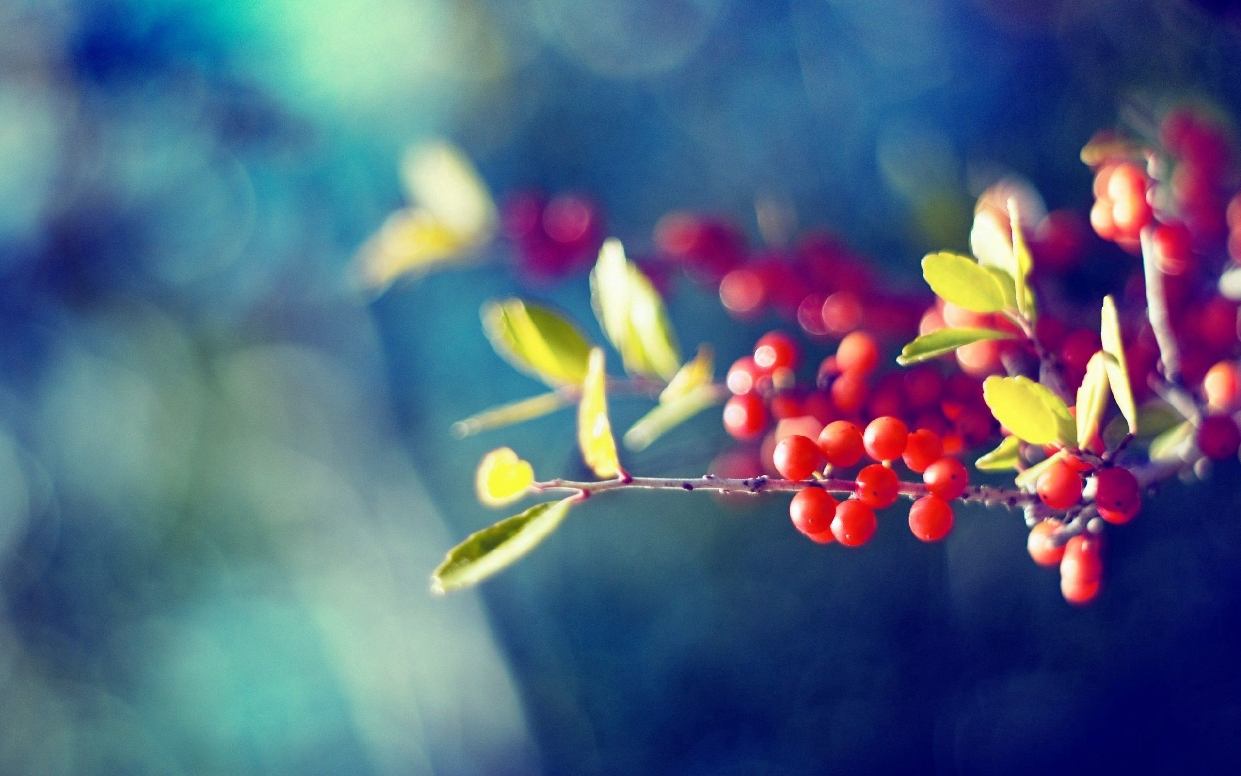 83968 download wallpaper Macro, Branch, Glare, Leaves, Berries screensavers and pictures for free