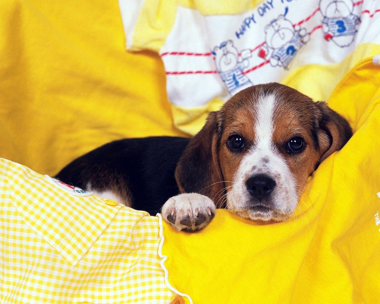 49105 скачать обои Животные, Собаки - заставки и картинки бесплатно