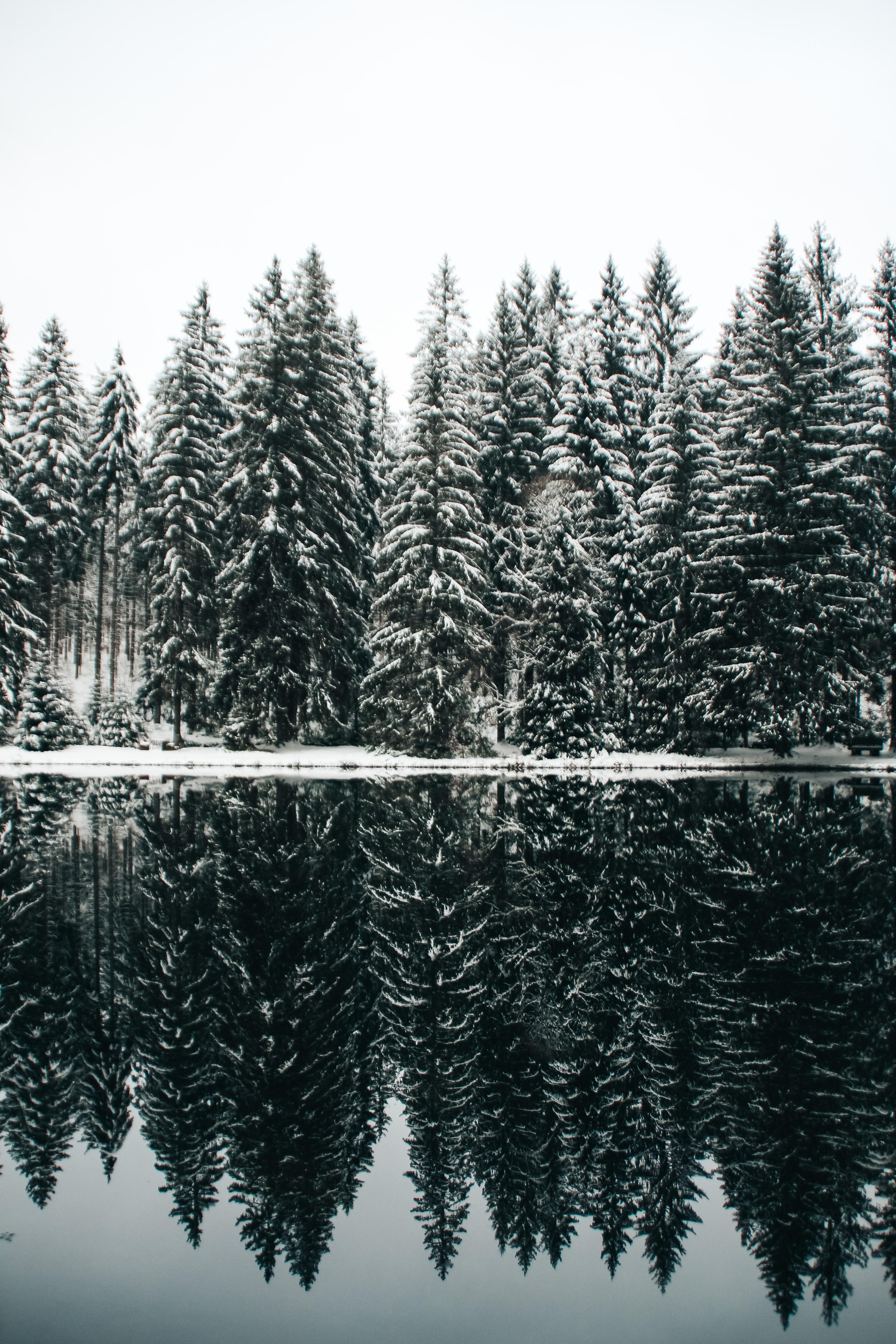 153996 скачать обои Природа, Деревья, Снег, Озеро, Отражение, Елки - заставки и картинки бесплатно