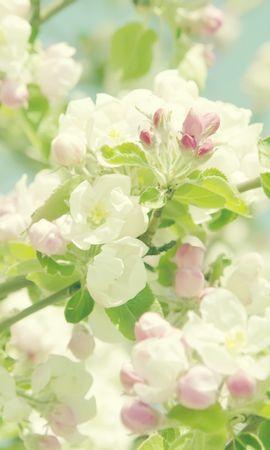 41478 скачать обои Растения, Цветы, Фон - заставки и картинки бесплатно