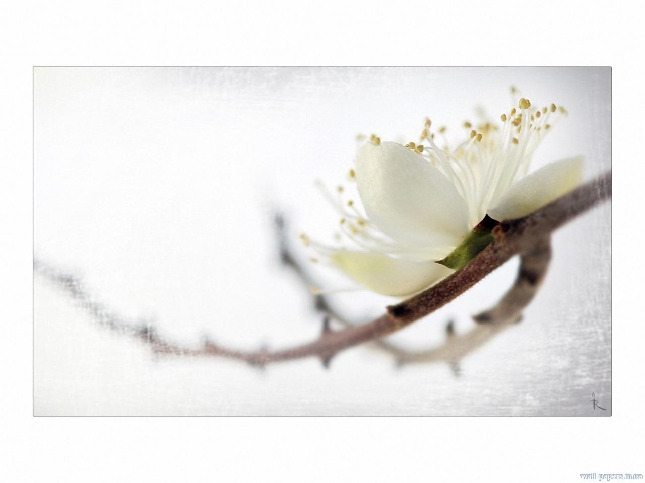 2509 скачать обои Растения, Цветы - заставки и картинки бесплатно