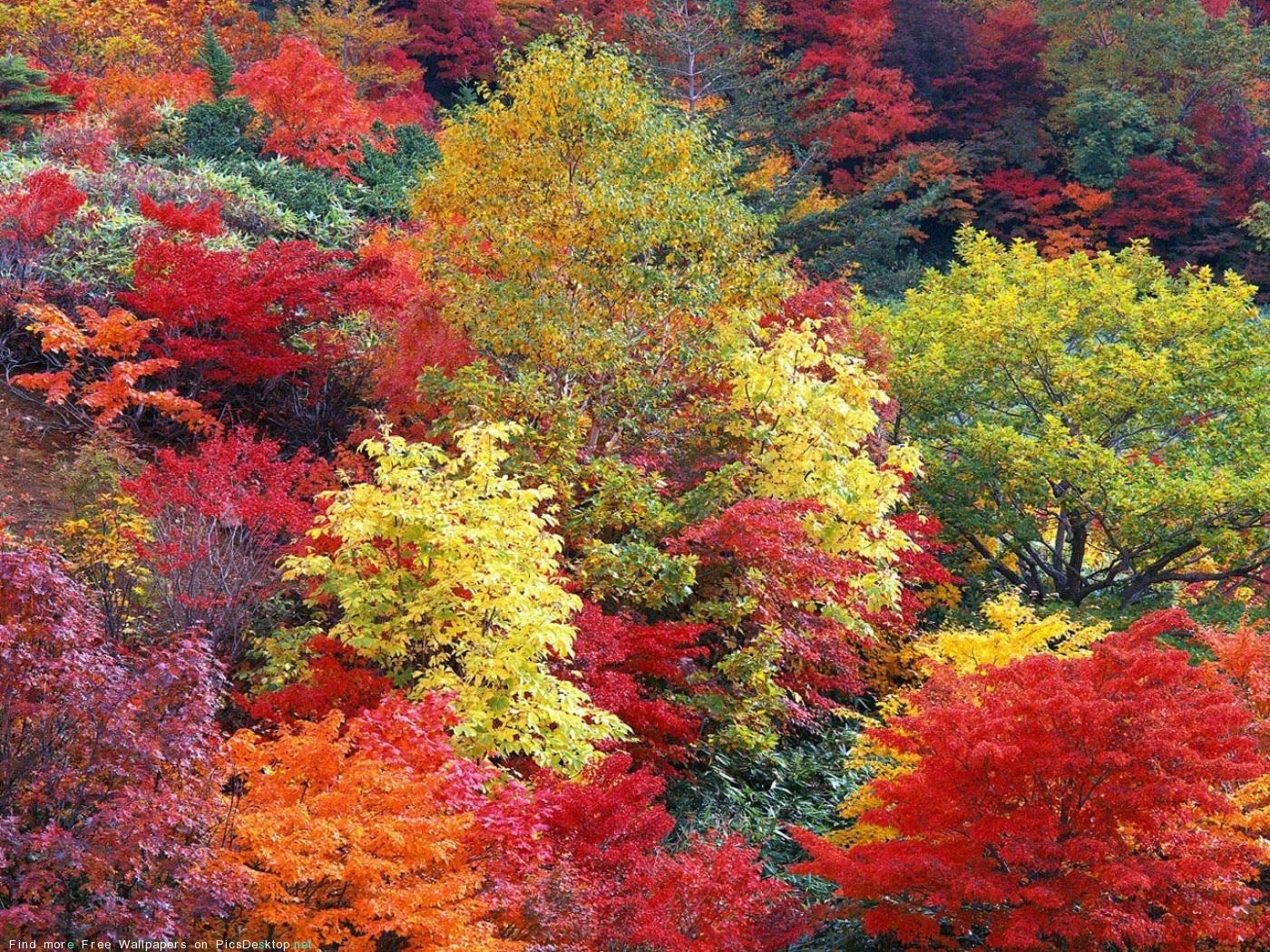 1818 скачать обои Пейзаж, Деревья, Осень - заставки и картинки бесплатно