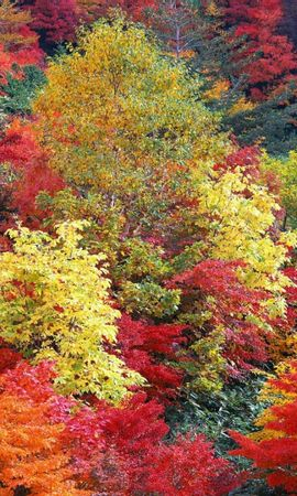 1818 download wallpaper Landscape, Trees, Autumn screensavers and pictures for free