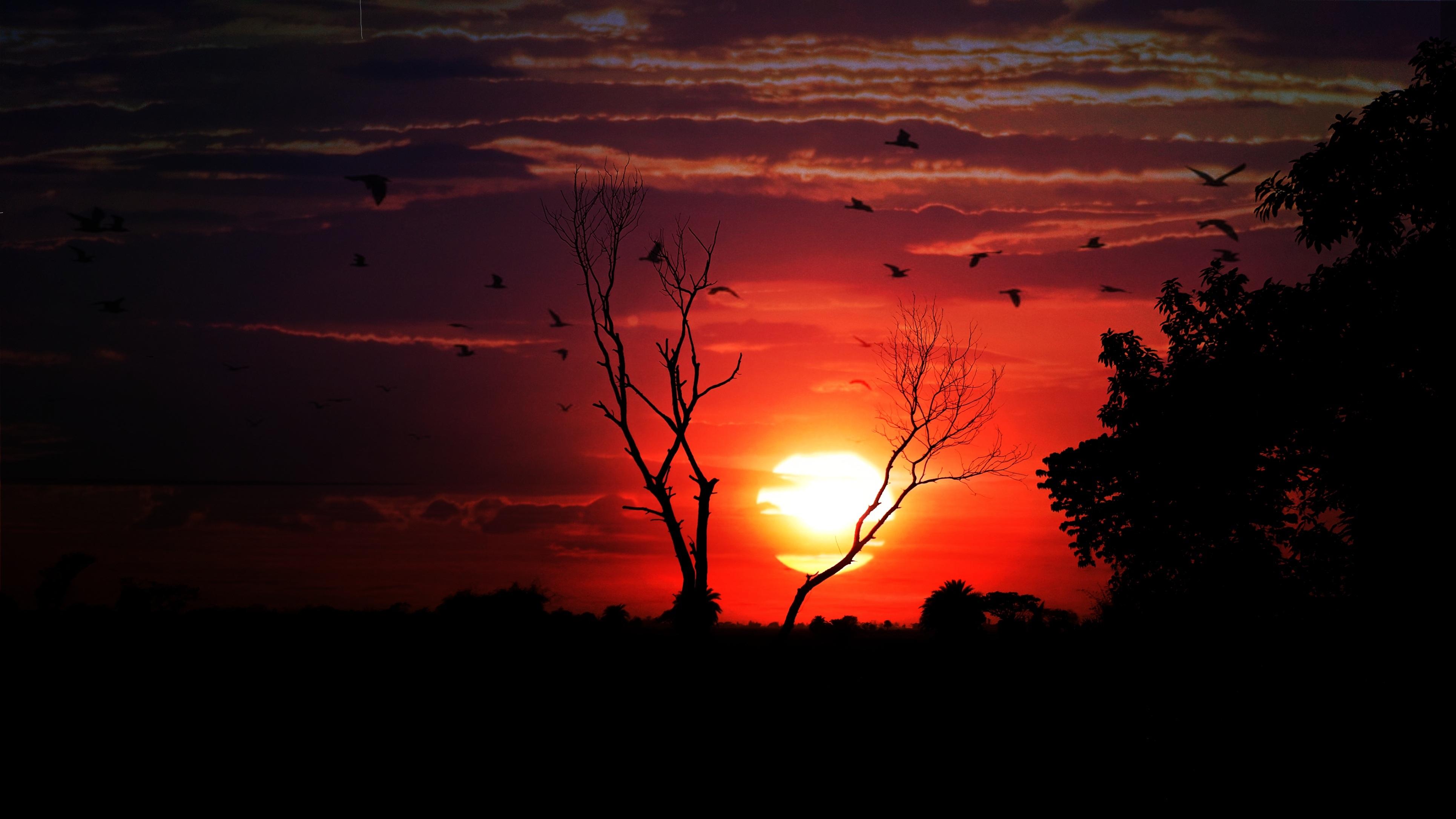142163 économiseurs d'écran et fonds d'écran Sombre sur votre téléphone. Téléchargez Oiseaux, Coucher De Soleil, Sky, Sombre, Bois, Arbre images gratuitement
