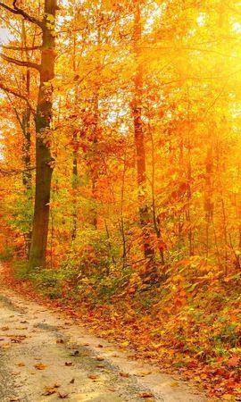 20688 скачать обои Пейзаж, Деревья, Дороги, Осень, Солнце - заставки и картинки бесплатно