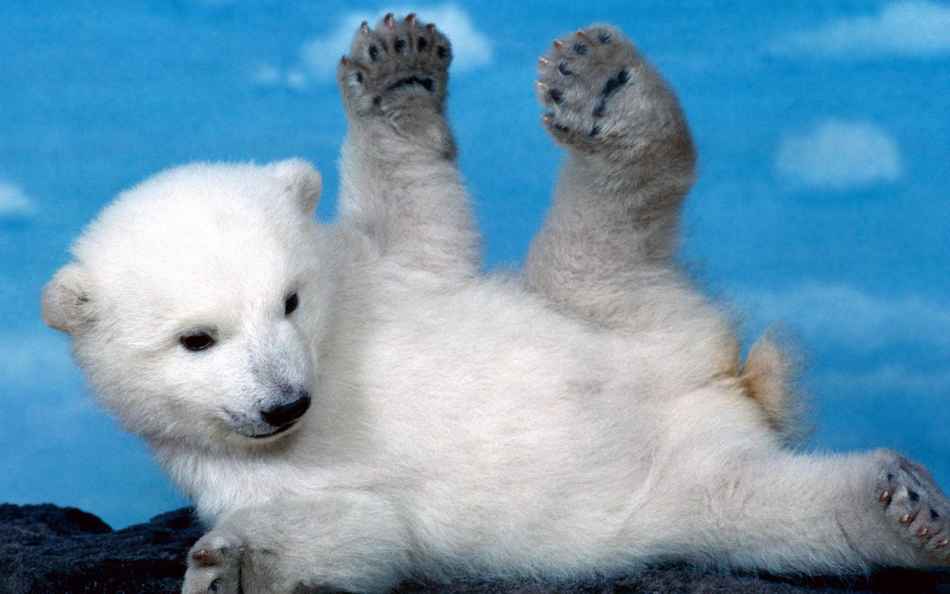 Baixar papel de parede para celular de Bears, Animais gratuito.