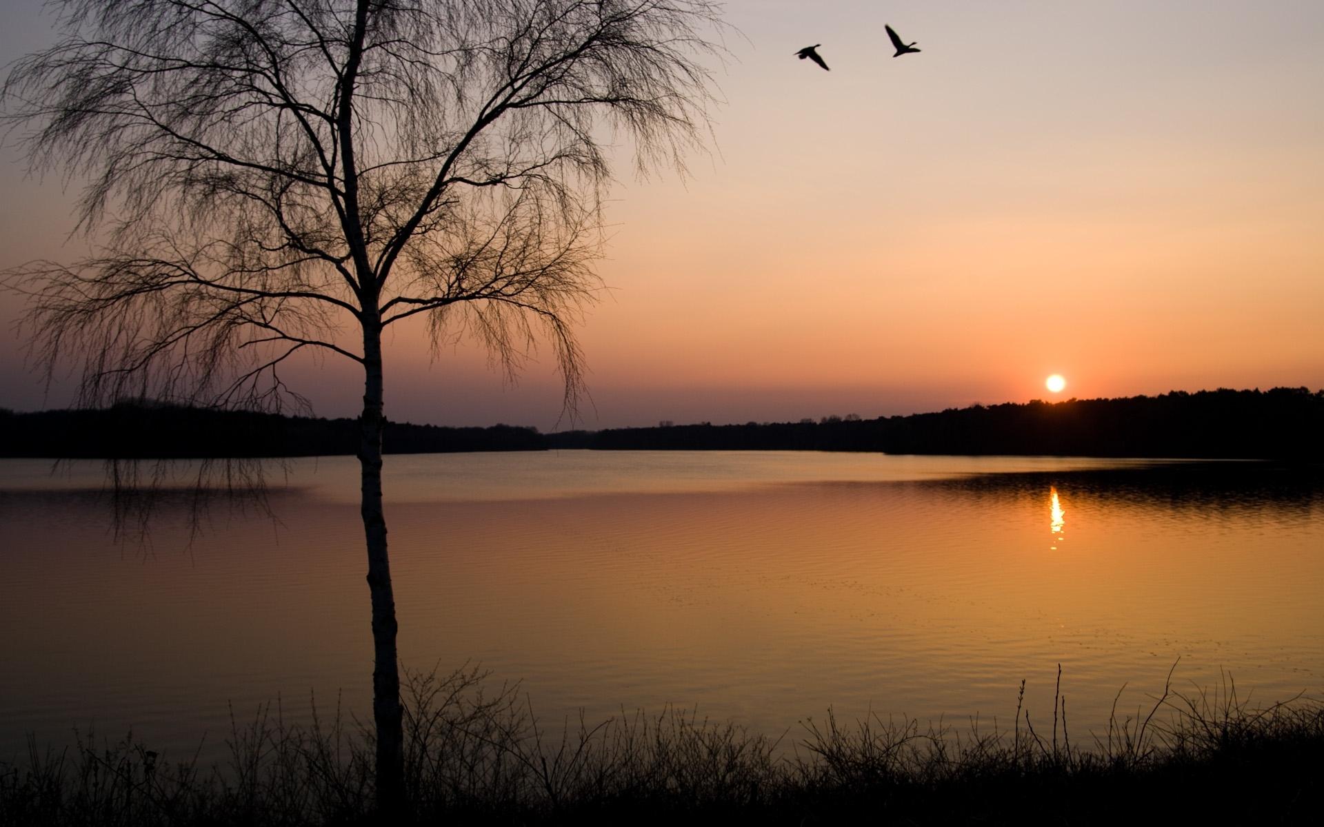 7544 скачать обои Пейзаж, Деревья, Закат, Солнце, Озера - заставки и картинки бесплатно