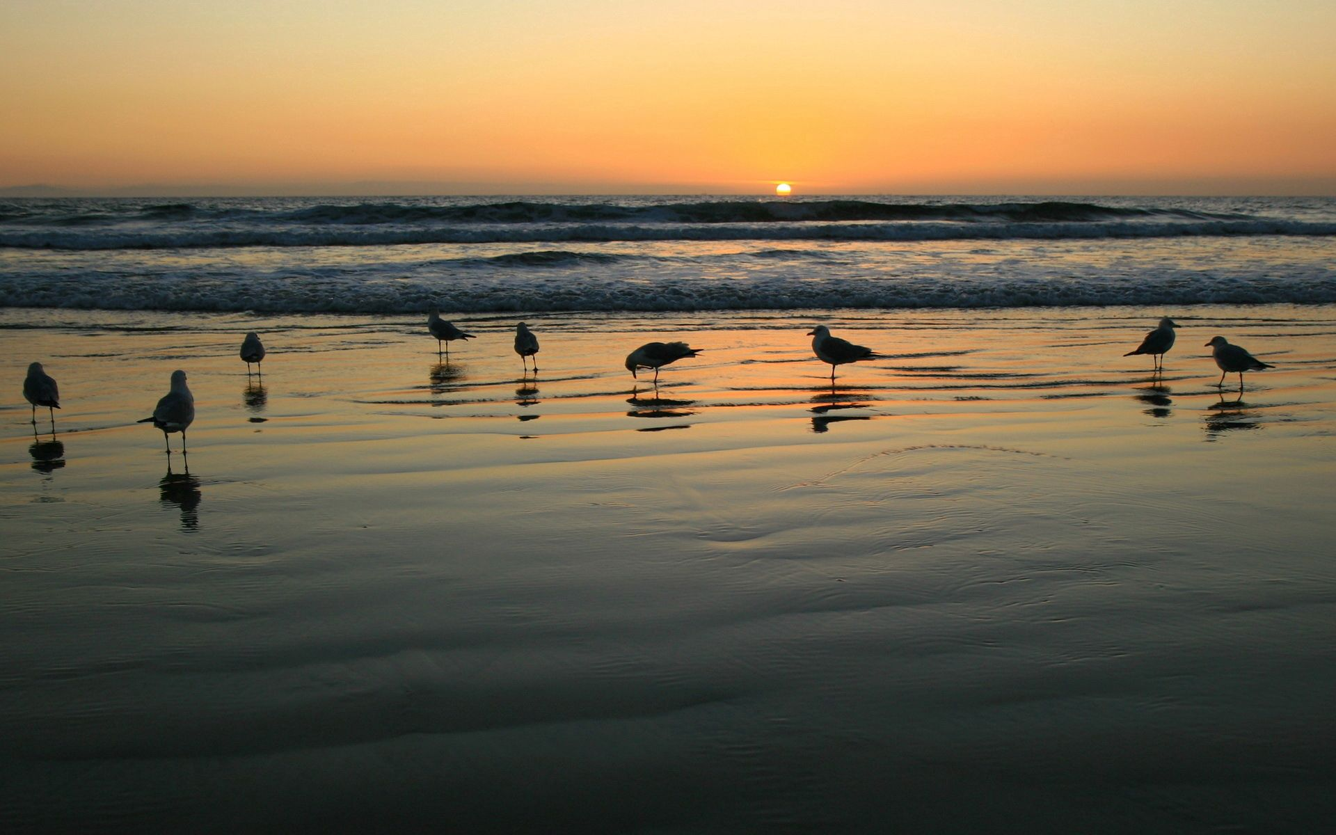 142665 download wallpaper Nature, Evening, Sand, Wet, Seagulls screensavers and pictures for free