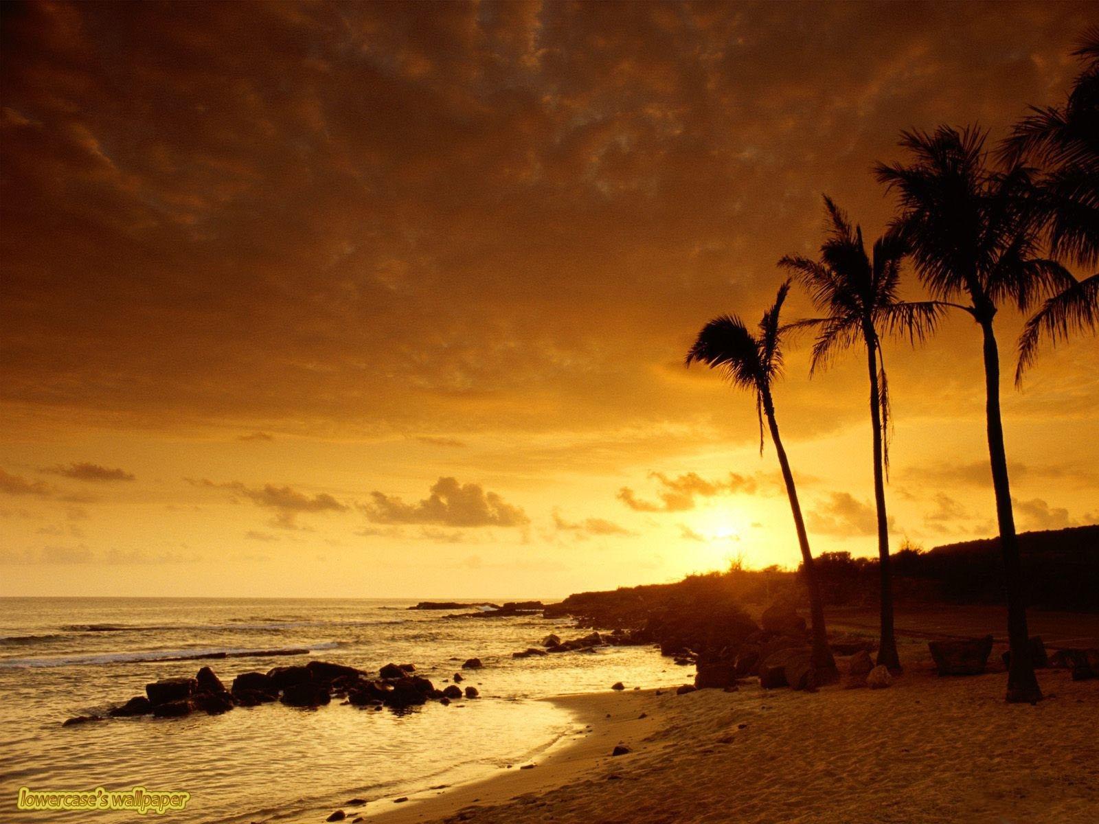 6078 скачать обои Пейзаж, Закат, Море, Пальмы - заставки и картинки бесплатно