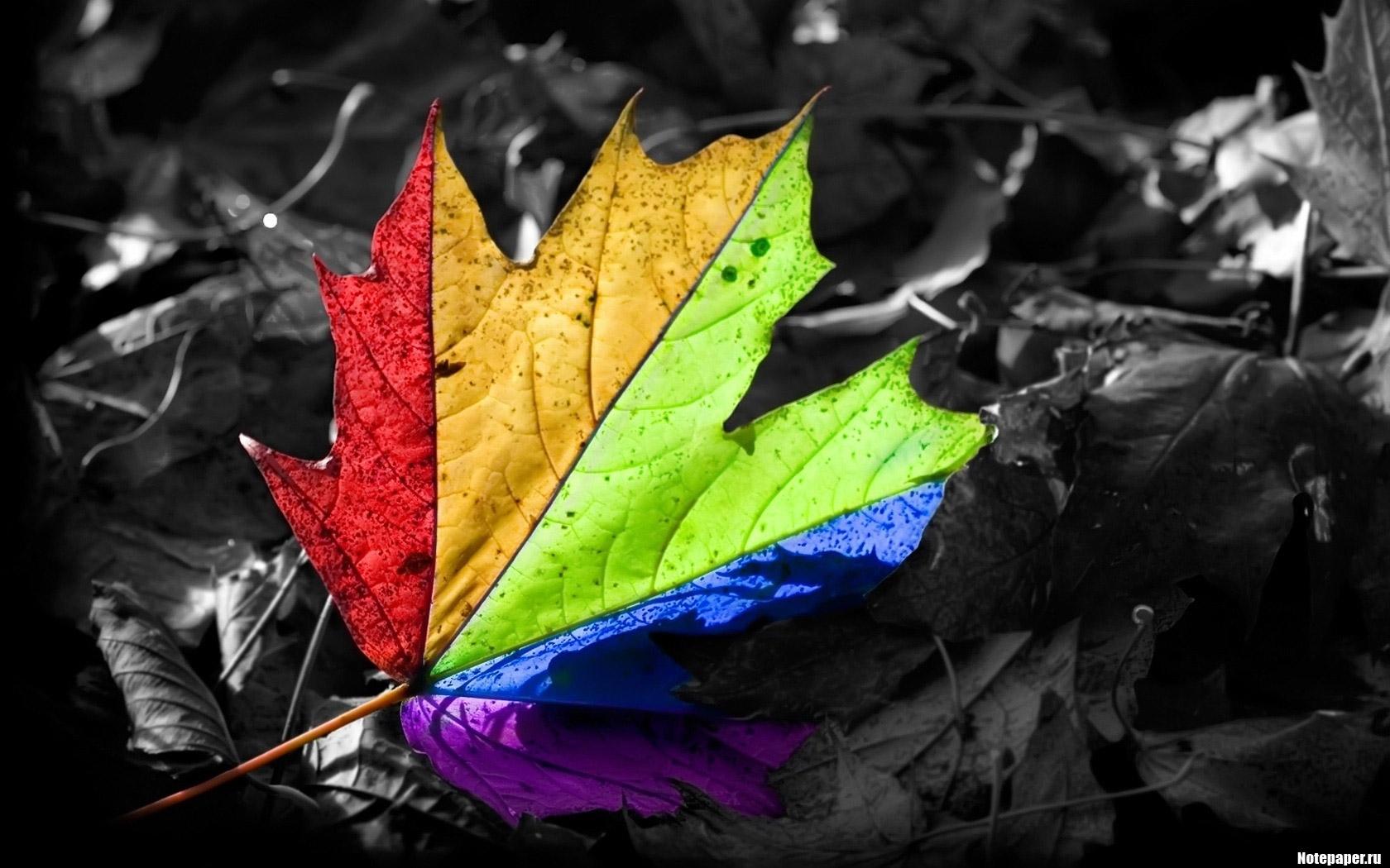 3680 скачать обои Растения, Листья - заставки и картинки бесплатно