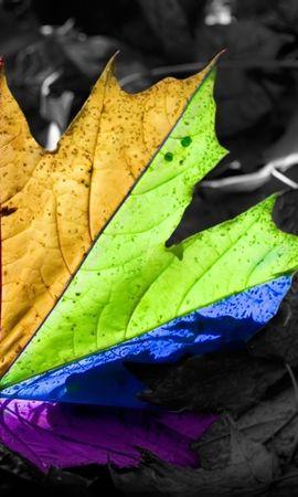 3680 descargar fondo de pantalla Plantas, Hojas: protectores de pantalla e imágenes gratis