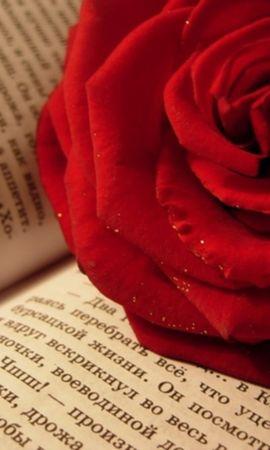 2743 скачать обои Растения, Цветы, Розы - заставки и картинки бесплатно