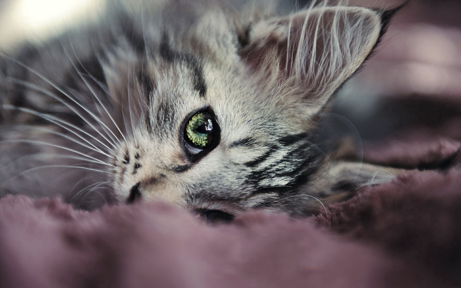 52679 download wallpaper Animals, Kitty, Kitten, Muzzle, Eyes, Nice, Sweetheart, Sight, Opinion screensavers and pictures for free