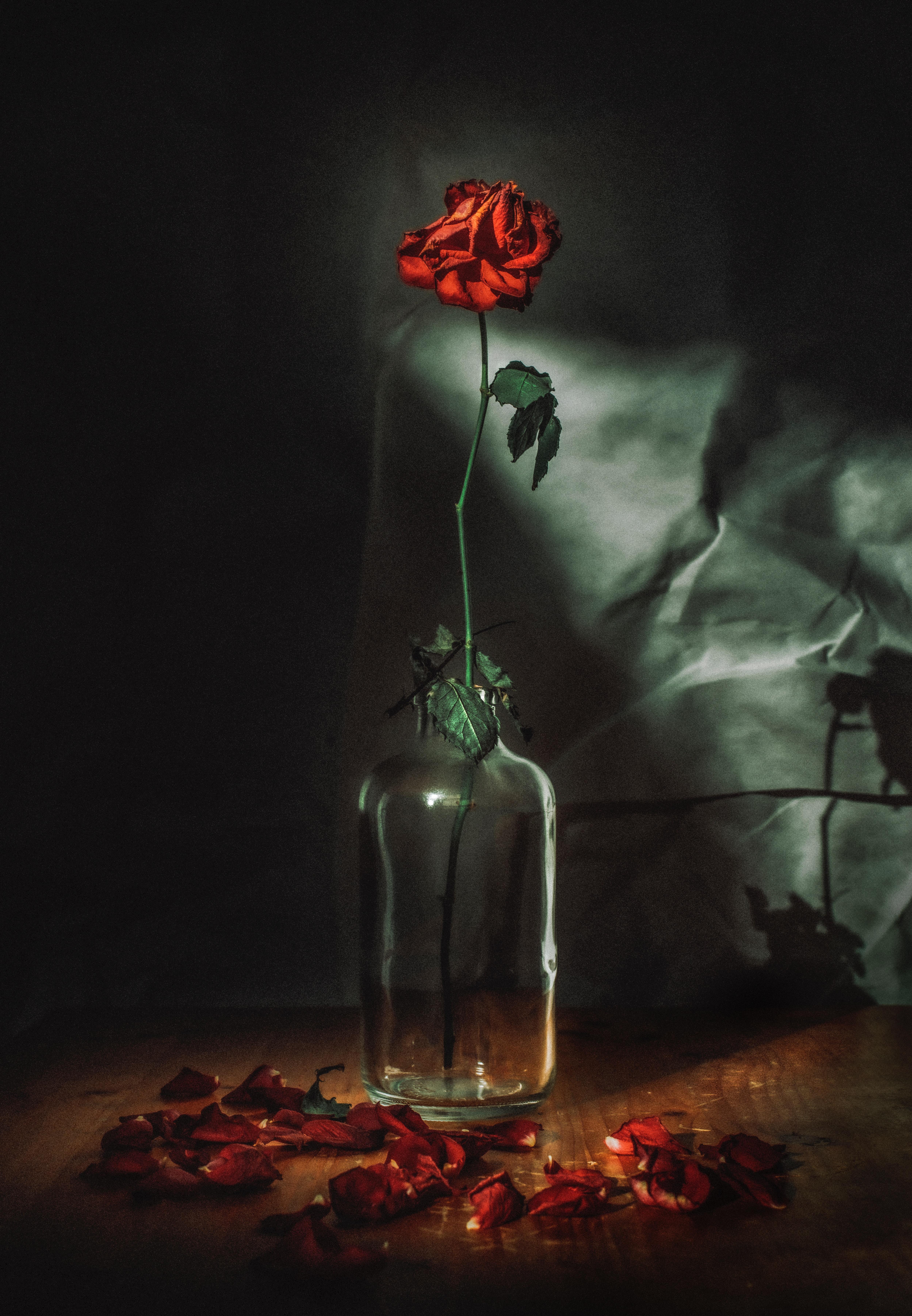 123660 скачать обои Роза, Цветы, Цветок, Лепестки, Красный, Ваза - заставки и картинки бесплатно