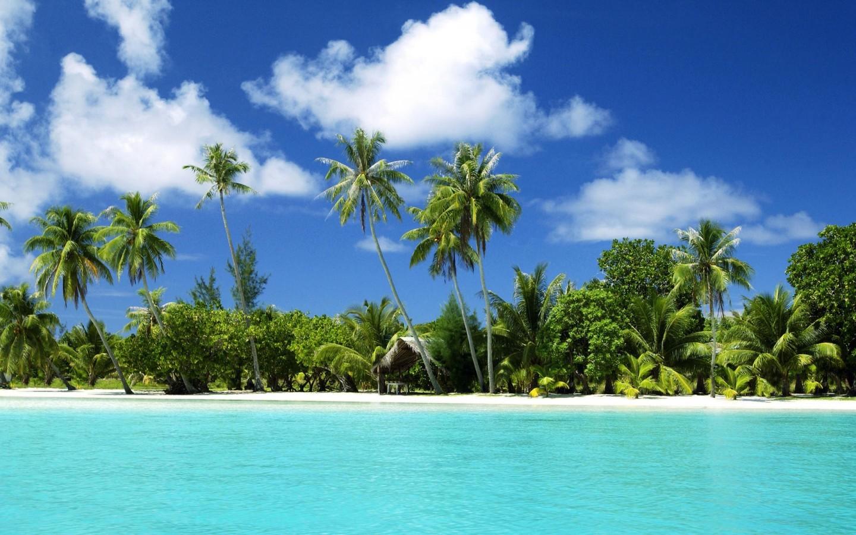 17430 скачать обои Пейзаж, Море, Пляж, Пальмы - заставки и картинки бесплатно