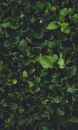 78260 descargar fondo de pantalla Macro, Hojas, Mojado, Rocío, Plantas: protectores de pantalla e imágenes gratis