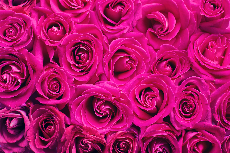 100808 скачать обои Цветы, Розовый, Букет, Лепестки, Розы - заставки и картинки бесплатно