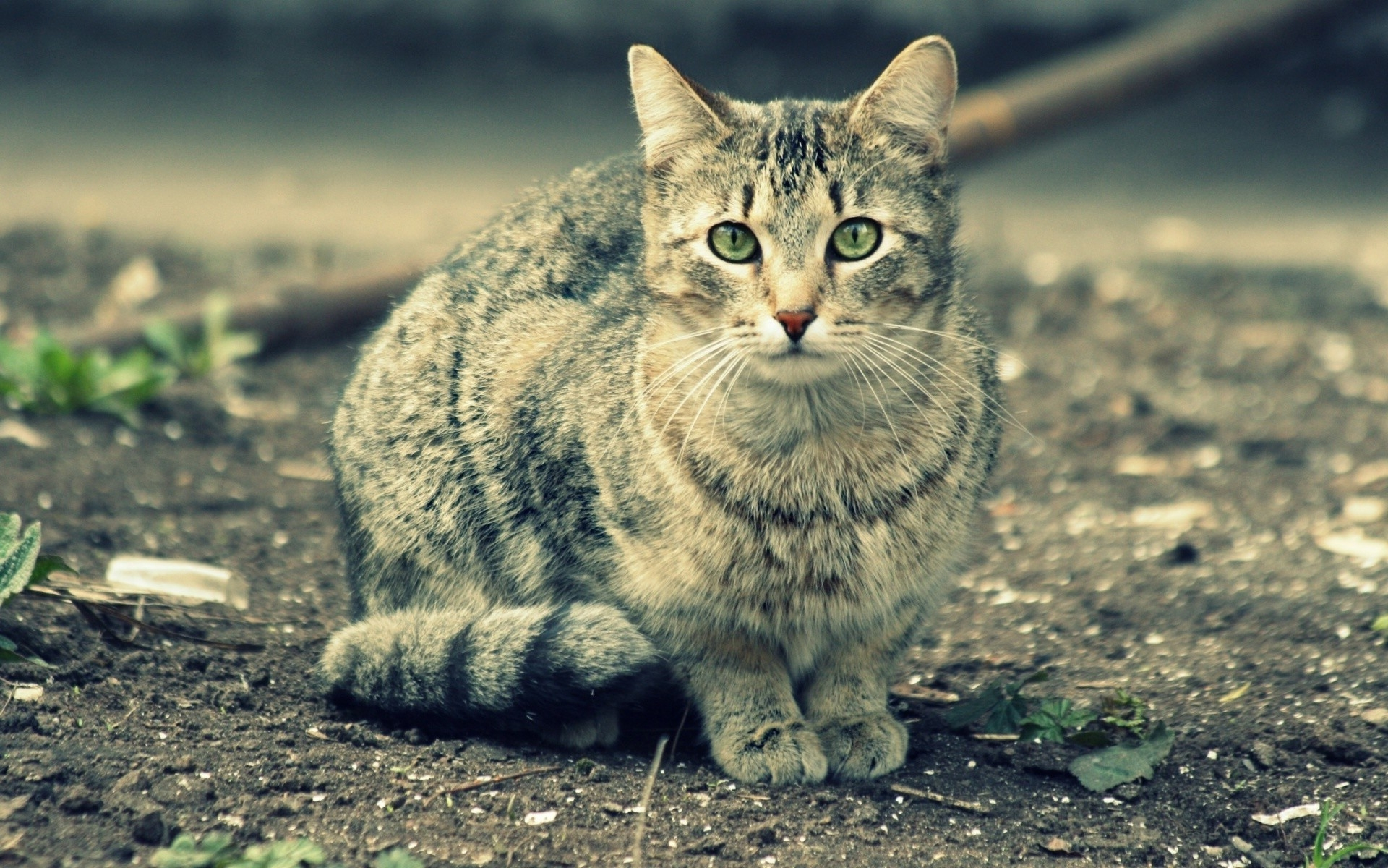 49415 download wallpaper Animals, Cats screensavers and pictures for free