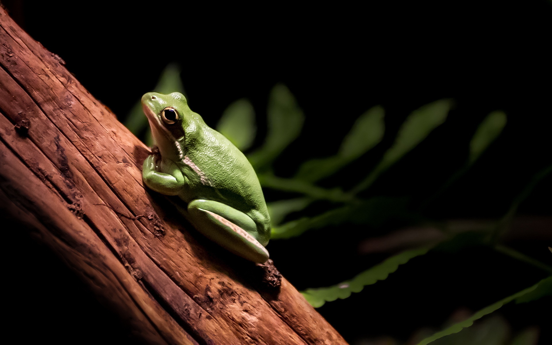 27282 download wallpaper Animals, Frogs screensavers and pictures for free