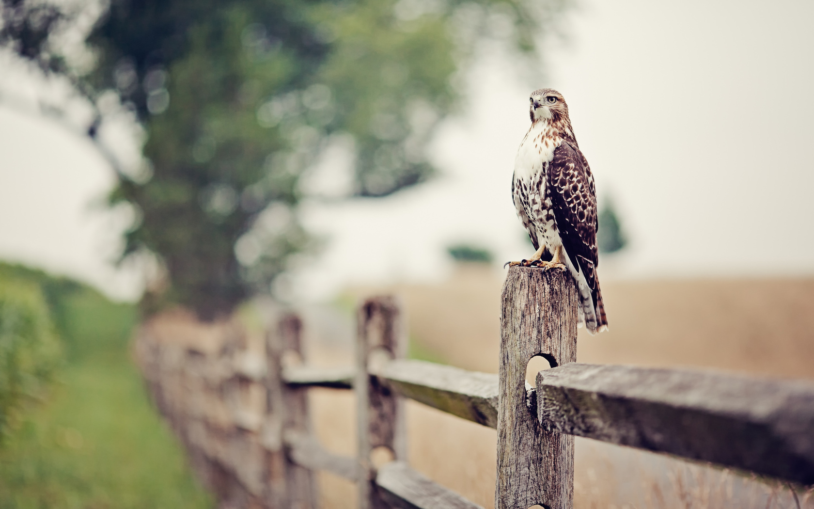 15501 download wallpaper Animals, Birds, Falcons screensavers and pictures for free