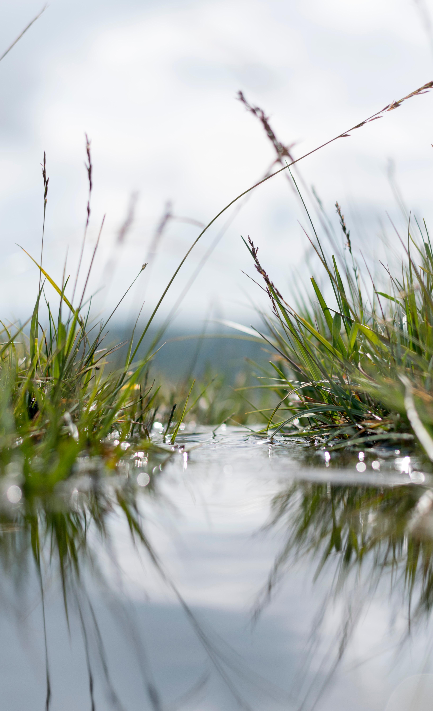 155806 скачать обои Макро, Трава, Вода, Растения, Зеленый - заставки и картинки бесплатно