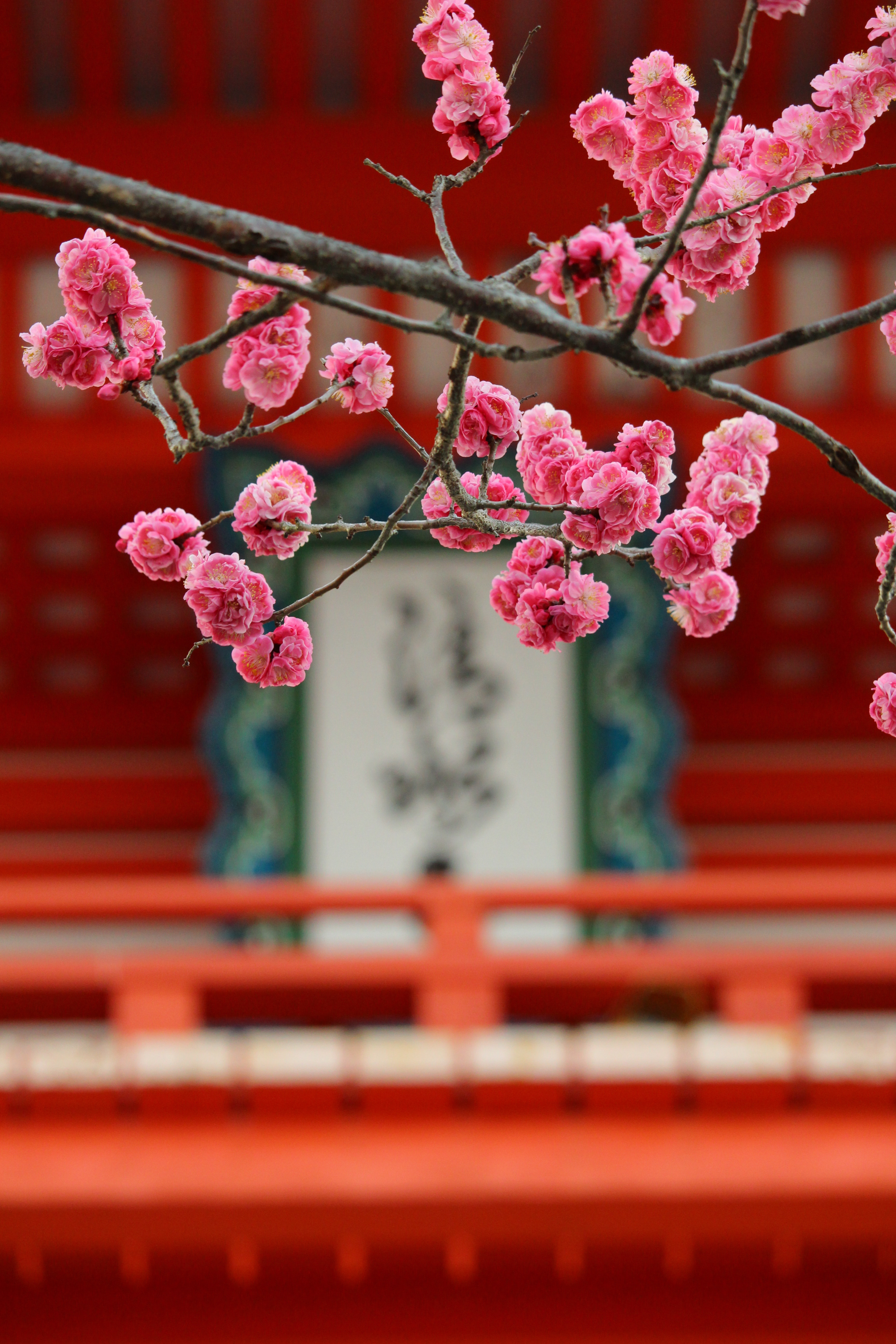 73723 Screensavers and Wallpapers Sakura for phone. Download Flowers, Pink, Sakura, Blur, Smooth, Bloom, Flowering pictures for free