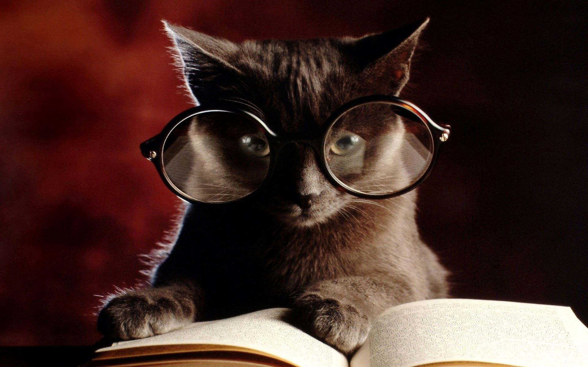116148 Screensavers and Wallpapers Book for phone. Download Animals, Cat, Book, Glasses, Spectacles pictures for free