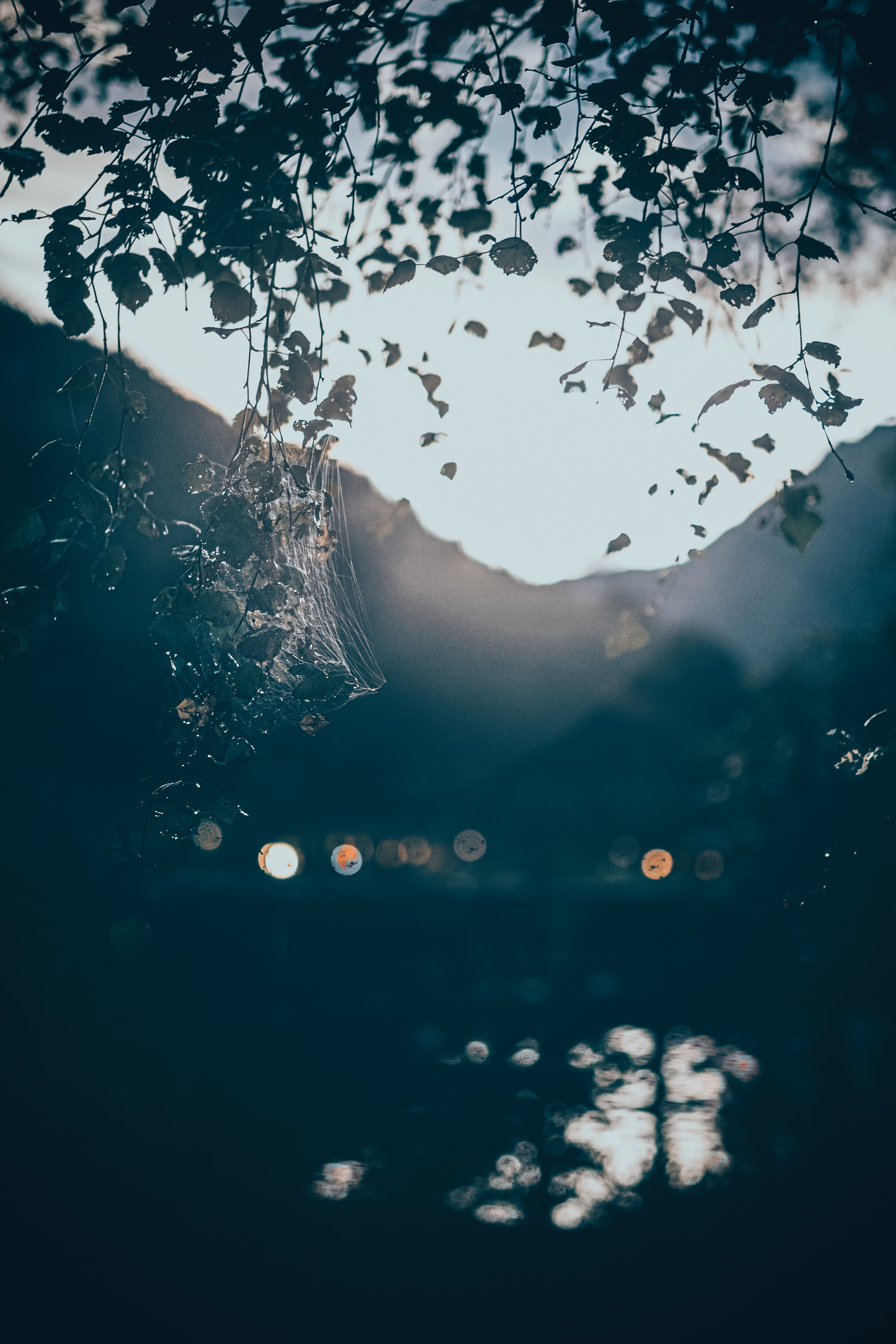 131181 download wallpaper Nature, Branches, Web, Shine, Light, Glare, Bokeh, Boquet, Blur, Smooth screensavers and pictures for free