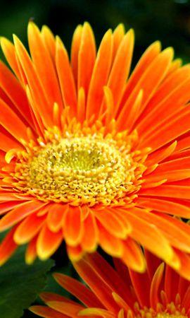 46266 descargar fondo de pantalla Plantas, Flores: protectores de pantalla e imágenes gratis
