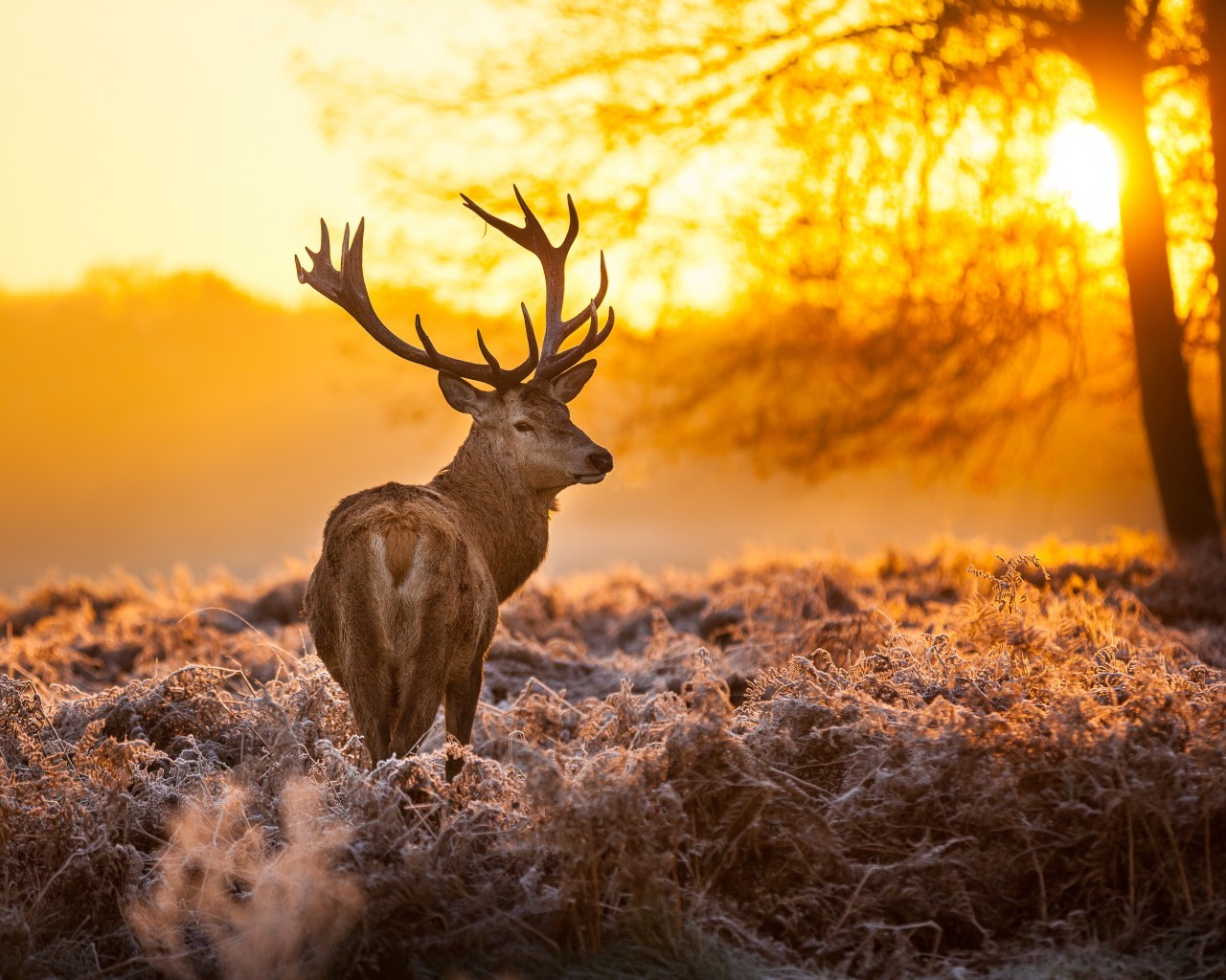 16902 download wallpaper Animals, Sunset, Deers screensavers and pictures for free