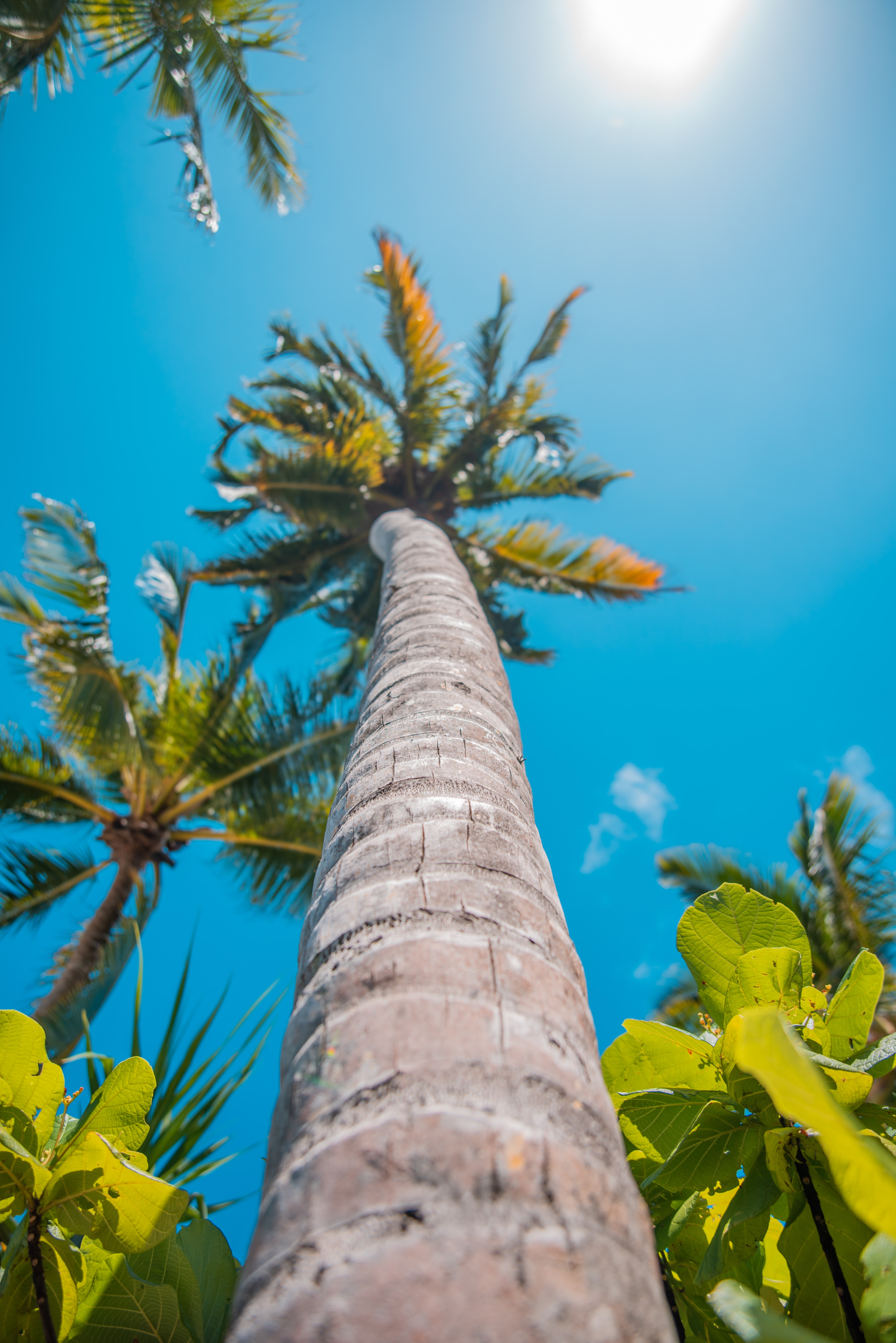 141870 download wallpaper Nature, Palm, Summer, Tropics, Sun screensavers and pictures for free