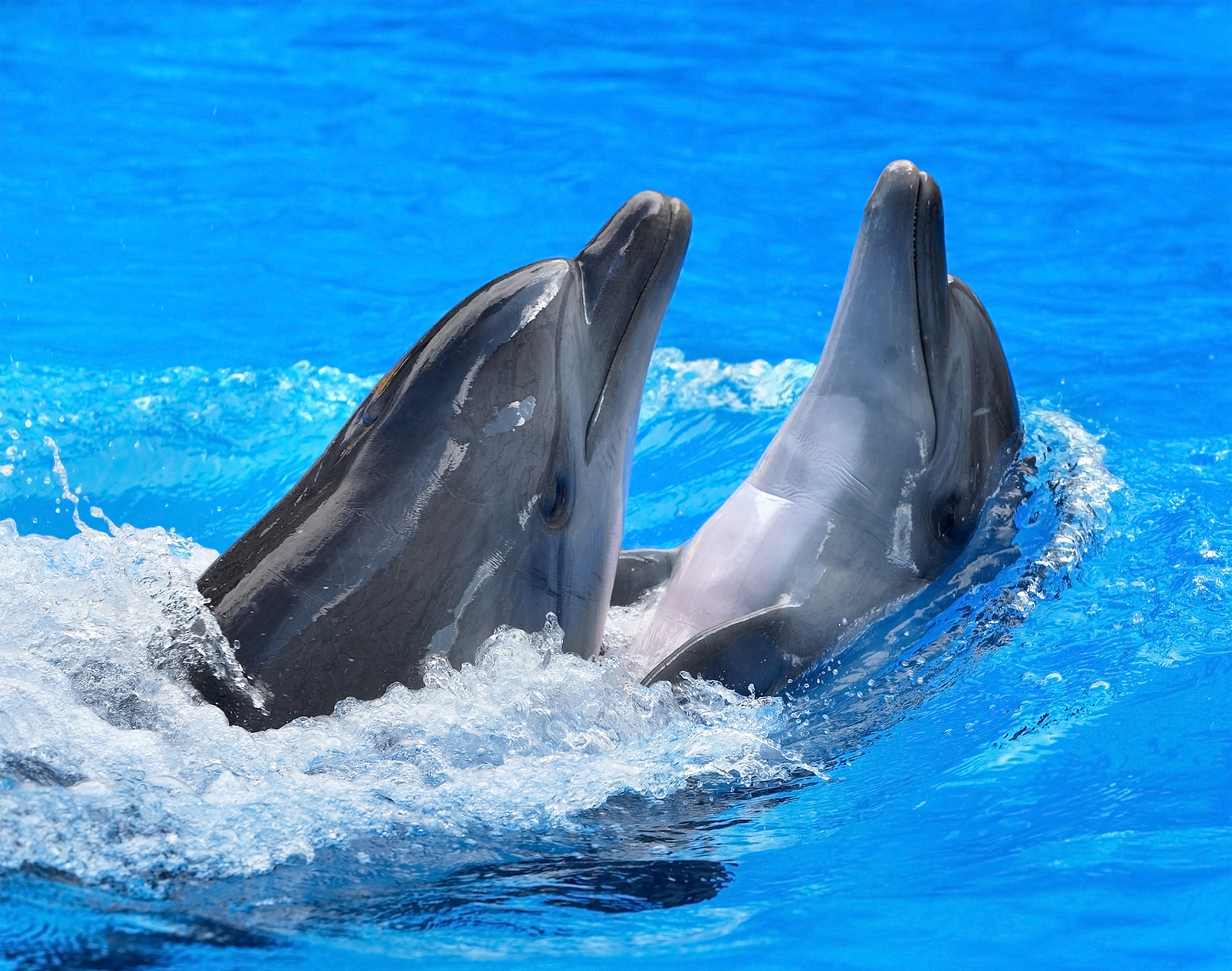 92932 download wallpaper Animals, Water, Dolfins, Couple, Pair, Spray screensavers and pictures for free